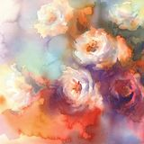 White roses colorful background watercolor Royalty Free Stock Images