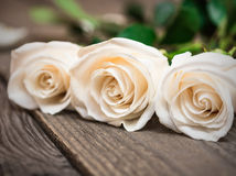White roses on a dark wooden background. Women' s day, Valentine Royalty Free Stock Photography