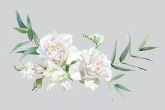 White roses and eucalyptus vector illustration