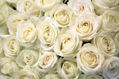White roses. Floral Texture and background. Flowers closeup. Wedding and wedding accessory. The rose petals. A large bouquet Stock Image