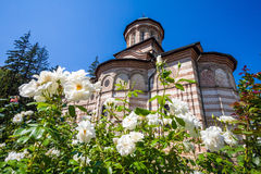 White roses flowers in front of Cozia monastery church on a sunn Royalty Free Stock Image