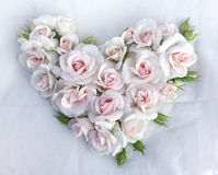 White roses flowers heart shape on white cloth background. Stock Image