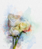 White roses flowers painting in pastel color with light pink yellow and blurred style Stock Image