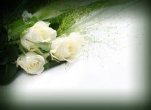 White roses frame Stock Image