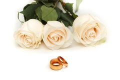 White roses isolated. On the white background Stock Images