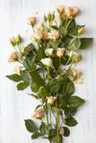 White roses isolated Royalty Free Stock Photos