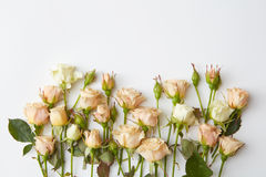 White roses isolated Stock Photo