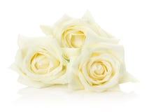 White roses isolated on the white background Stock Photo