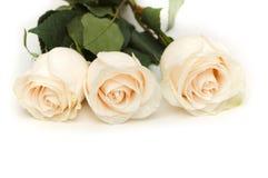 White roses isolated on the white background. White roses isolated on  the white background Stock Image