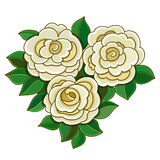 White roses with leaves isolated on white background. Royalty Free Stock Image