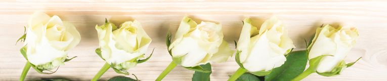 White roses lie in a line against a wooden background royalty free stock images