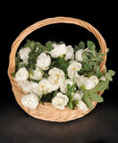 White roses lie to a basket. White roses lie in a wattled basket on a black background Royalty Free Stock Image