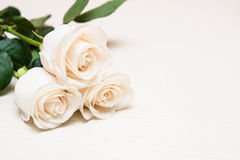 White roses on a light wooden background. Women' s day, Valentin Stock Images