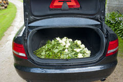 White roses. A lot of white roses in car trunk Royalty Free Stock Photos