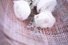 White roses for love on Valentine`s Day stock image