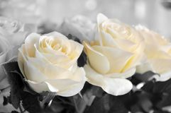 White roses made of cloth but of remarkable beauty Stock Photography