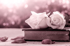 White roses on old book on bokeh background Royalty Free Stock Photos