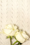 White roses over knitted texture Stock Photography