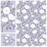 White Roses Pattern Royalty Free Stock Images