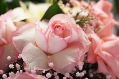 White Roses with pink borders Bouquet. Beautiful Roses bouquet with white roses with pink borders, pink and white baby`s breath gypsophila and tree ferns royalty free stock photos