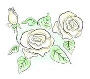 White roses Stock Image