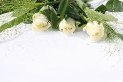 White roses trio Royalty Free Stock Image