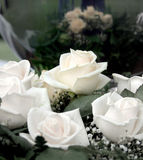 White roses for Valentine's Day Stock Image
