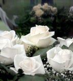White roses for Valentine's Day Stock Image