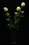 White roses in vase Stock Photos