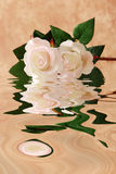 White roses in water Royalty Free Stock Photos