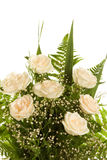White roses on the white background Royalty Free Stock Images