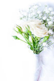 White roses on a white tulle Stock Photo