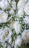 White roses. Woderful composition of white roses Royalty Free Stock Images