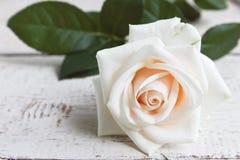 White roses. On white wooden background Royalty Free Stock Photos