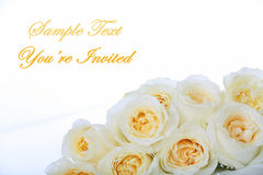 White roses with yellow centers Royalty Free Stock Images