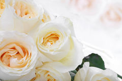 White roses with yellow centers Stock Image