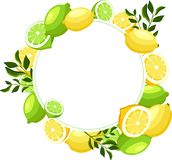White round background with limes and lemons. vector illustration