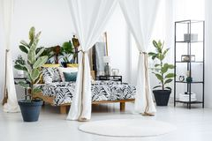 White sophisticated bedroom interior. White round rug and ficus trees next to a wooden bed with white drapes in sophisticated bedroom interior Royalty Free Stock Photography
