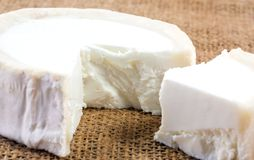 Closeup of fresh French goat`s cheese. Royalty Free Stock Image