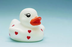 White Rubber Duck Stock Photos
