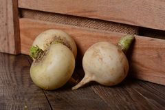 Turnip Royalty Free Stock Photography