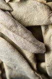 White Sage Stock Images