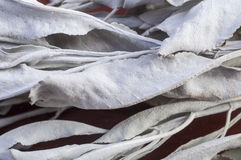 White sage Stock Photos