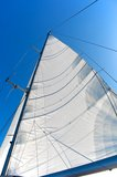 White Sail Stock Photography
