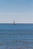 White Sailboat on Sunny Horizon Royalty Free Stock Photos