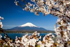 White sakura and mount Fuji at spring. White sakura or cherry blossom frame cover mount Fujisan or Fuji against blue sky at Yamanaka lake, Yamanashi, Japan royalty free stock photography