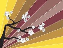 White sakuras on retro stripes Royalty Free Stock Photos