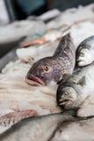 White salmon Stock Images
