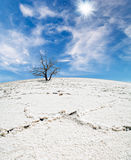 White salt desert Stock Photo