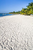 White sand beach. Beautiful sandy beach with coconut palm trees Royalty Free Stock Images